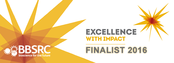 Excellence with Impact Finalist