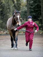 A horse being put through its paces at the Equine Hospital.