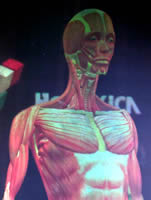 A full colour, animated 3D hologram of the human body