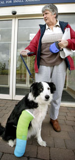 A border collie with a green and blue cast on its front right leg, with its owner