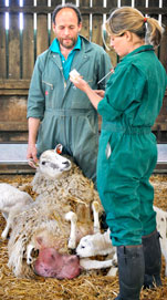 Two vets standing above a white sheep and her lambs