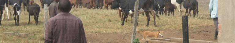 MSc in International Animal Health