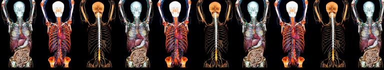 Anatomical Sciences (Online Distance Learning)