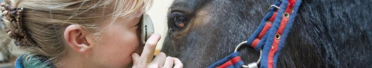 Equine Veterinary Services