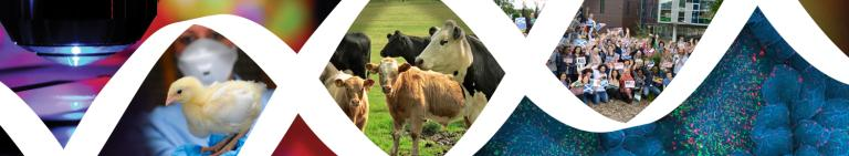 Improving Animal Production & Welfare