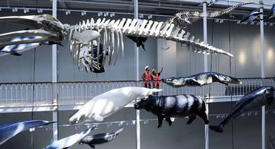 Wildlife panorama at National Museum of Scotland