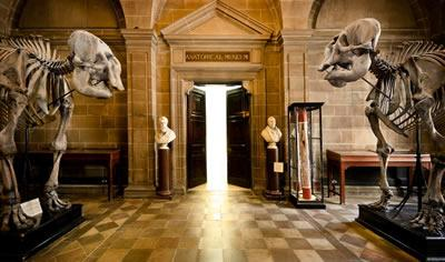 two Asian elephant skeletons at the Anatomical Museum entrance