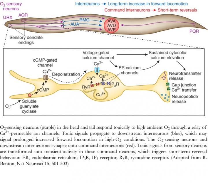 Fig 1 neural circuit