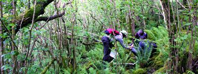 forestry research
