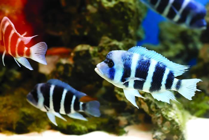 Zebrafish aid quest to treat disease | The University of Edinburgh