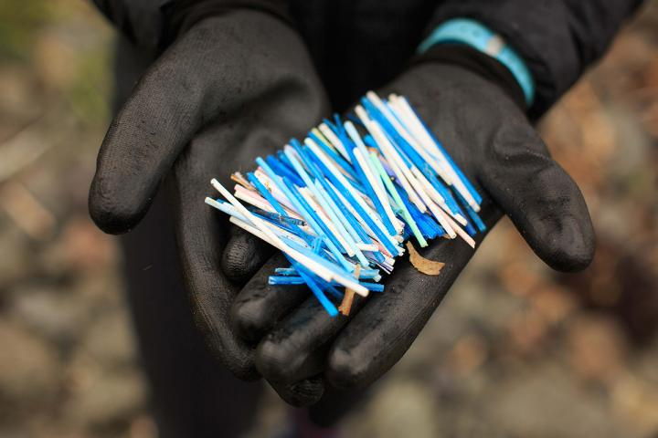 A handful of cotton buds found on the beach