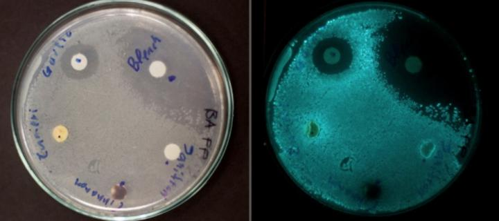 Bacteria on plates