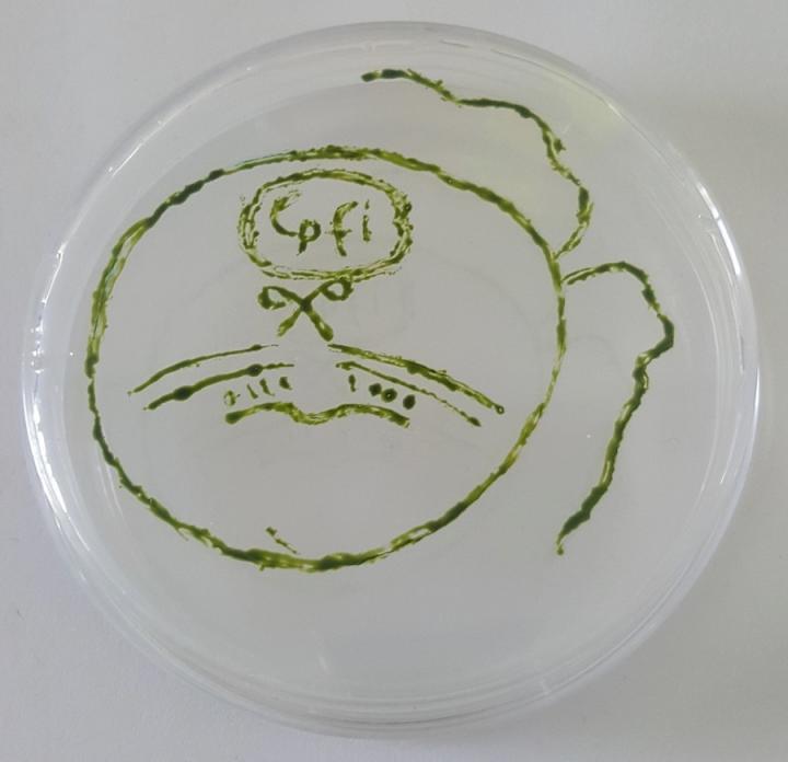 Algae gene-editing using CRISPR