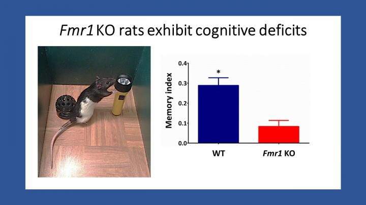 """Using spontaneous object exploration tasks to explore cognitive deficts in rats models of intellectual disabilities"""