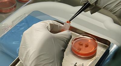 Photo of a scientist preparing ovarian tissue for testing