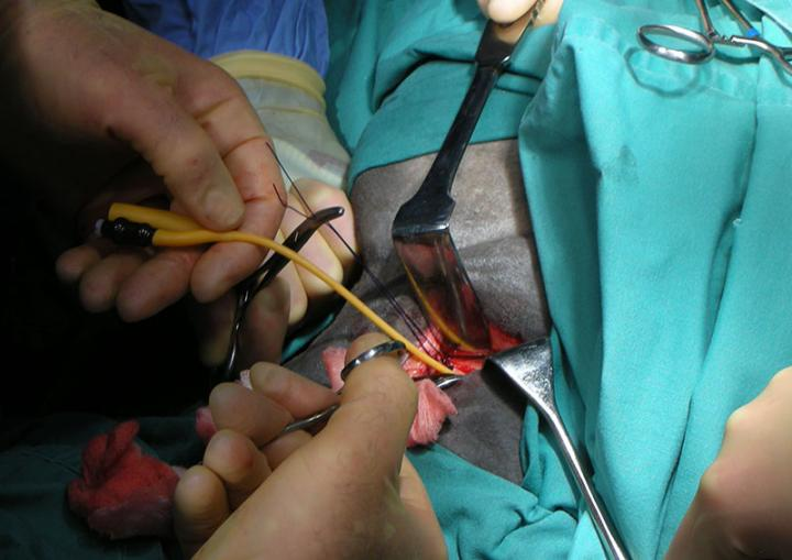 equine soft tissue surgery