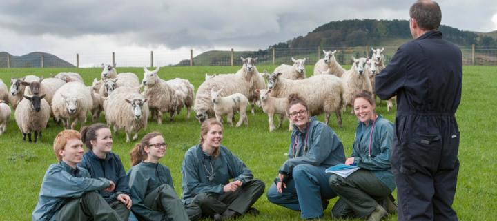 Students in a field with sheep in the background