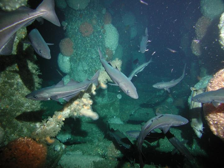 Image showing corals growing on oil platform