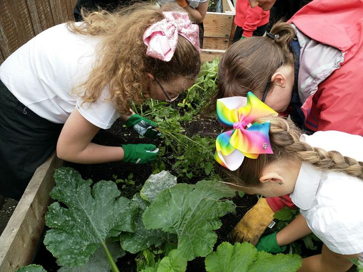 Green Learning project, Leith Community Crops, 2018