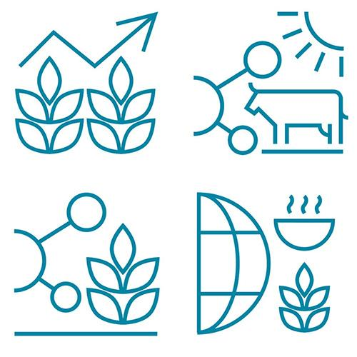 An image showing the unique icon for each of the four undergraduate programmes.