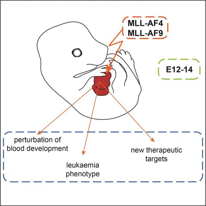 Studying the developmental origins of infant leukaemia
