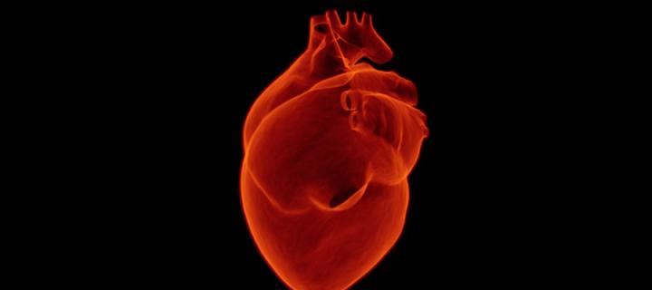 An image of a heart