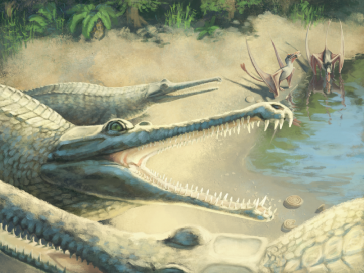 Artist's impression of Mystriosaurus