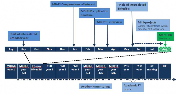 TRACC Programme MB-PhD schematic