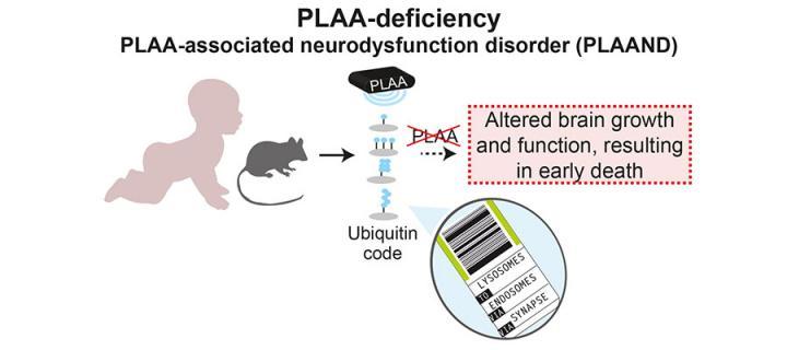 Gene identified for the severe childhood disease PLAAND