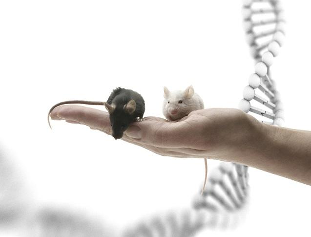 mouse and DNA