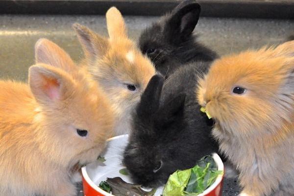 rep-rabbits
