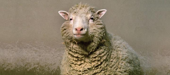 Photo of Dolly the Sheep