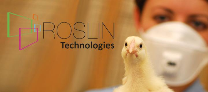 Person holding a chick next to Roslin Technologies logo