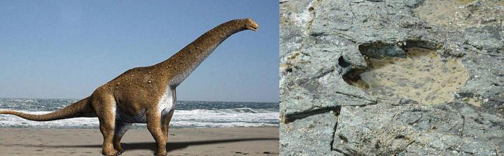 early sauropod and a newly discovered footprint