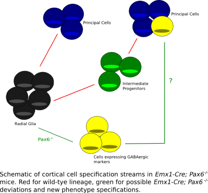 Figure1-lineagerg-TM