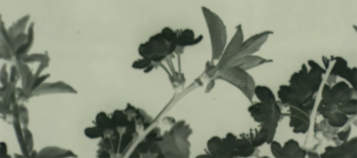 Still from Eric Lucey's archival film