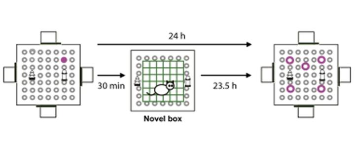 Schematic depiction of memory experiment