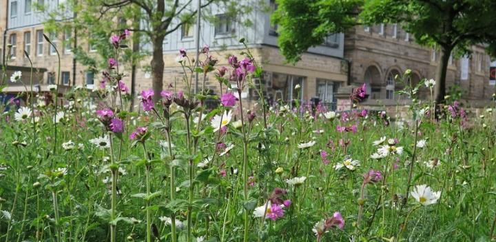 Wildflower meadow at ECCI