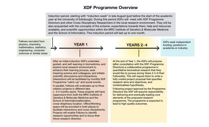 XDF Overview Schematic