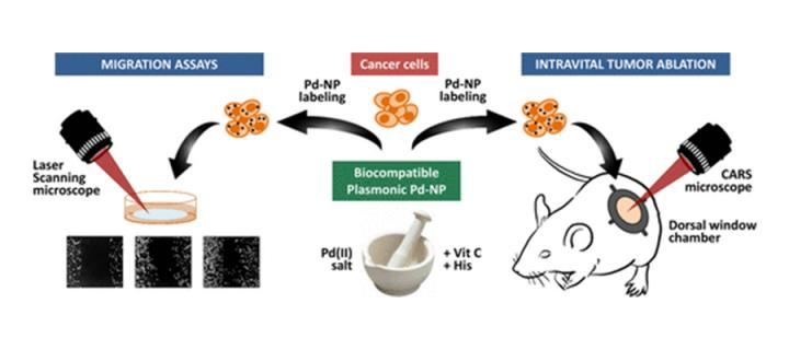 Killing cancer cells using palladium nanoparticles | The