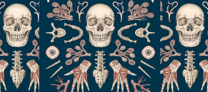 Image from the front cover of Anatomicum