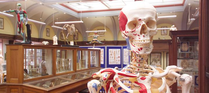 View of the anatomy museum