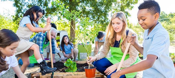 Children and teachers gardening
