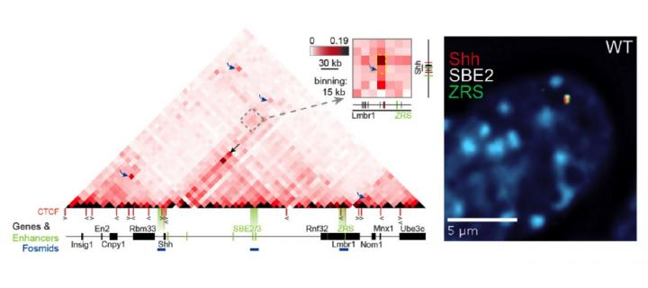 sdrnt1bio-2014_chart