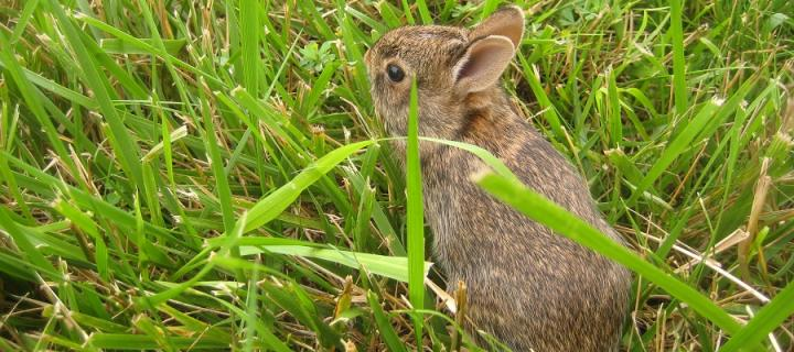 Baby rabbit on green grass