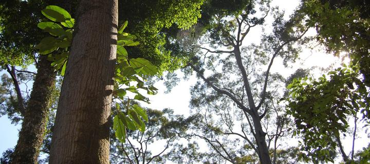 Trees in Borneo jungle