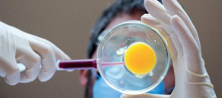 A man injecting an egg in a lab