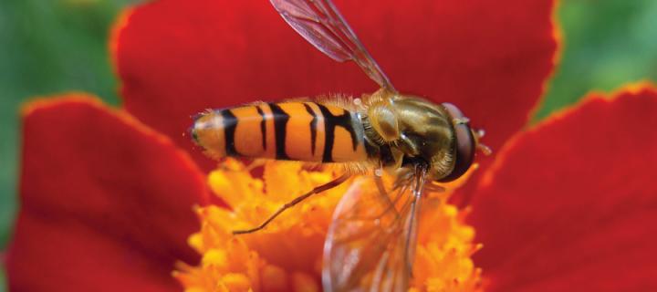 MSc Biodiversity and Taxonomy of Plants