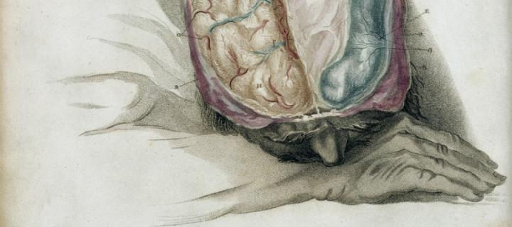 Charles Bell's sketch - The anatomy of the brain