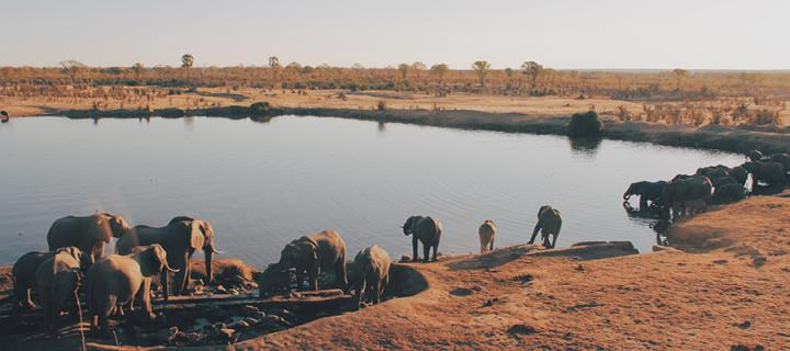 Elephants in a national park in Zimbabwe